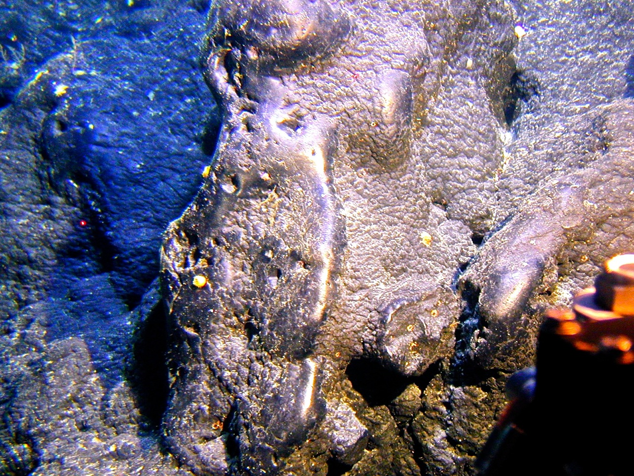 In the 800 to 2,500-meter depth range, manganese and other important minerals precipitate out of seawater to form crusts like this one.