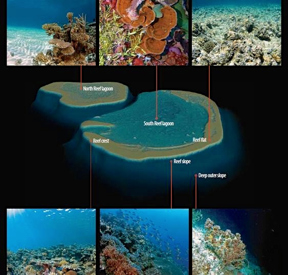A map of South Reef with images showing sample habitats from different areas.