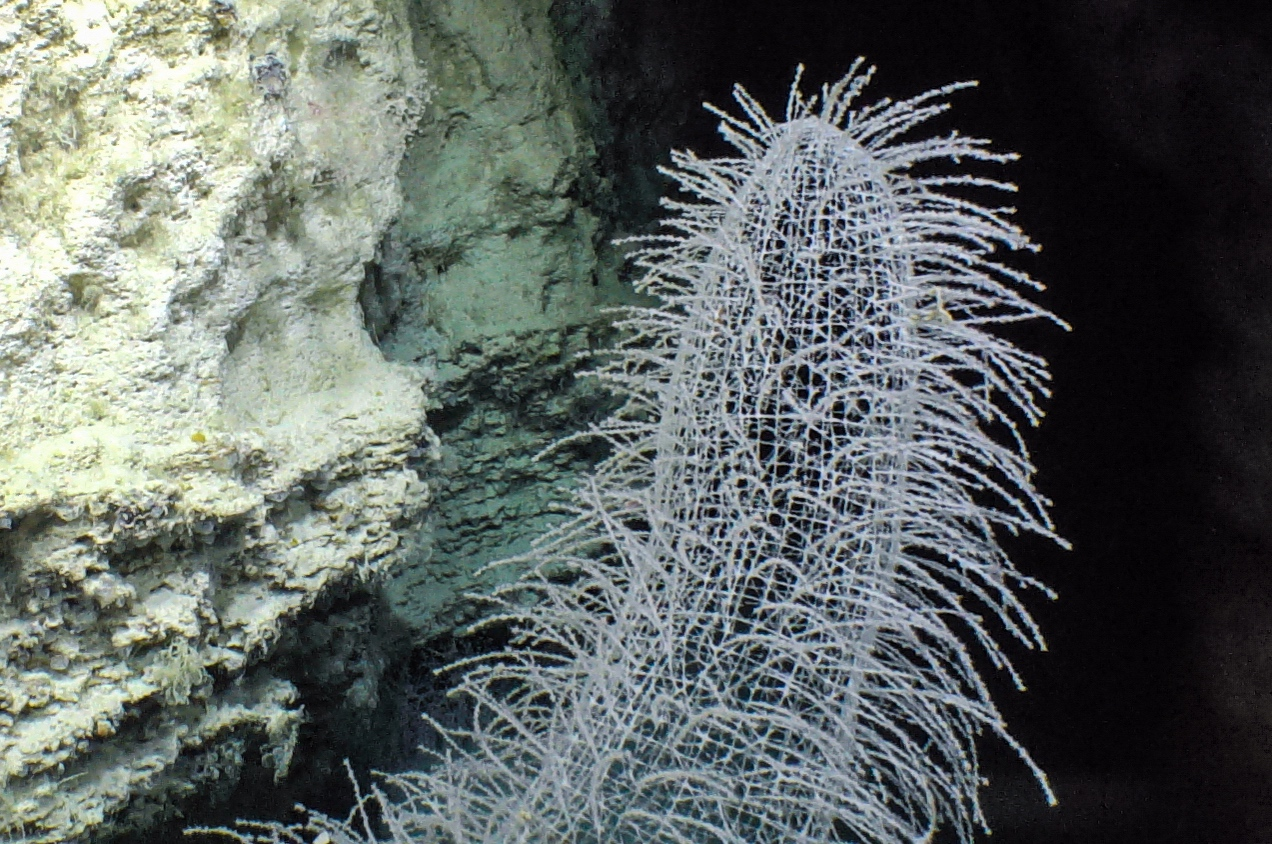 A Deep Sea Love Story Schmidt Ocean Institute