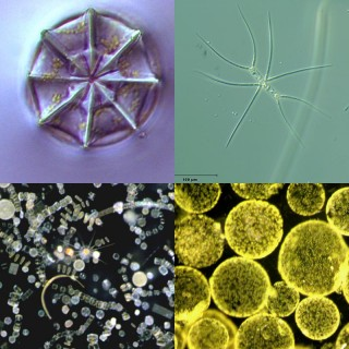 Plankton are amazing, beautiful unicellular creatures.