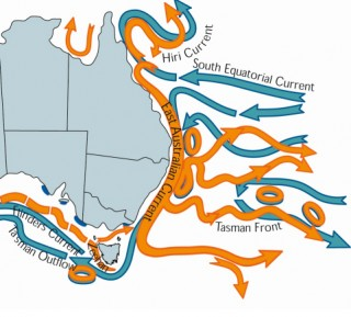 Graphic showing the path of the East Australia Current its associated eddies.