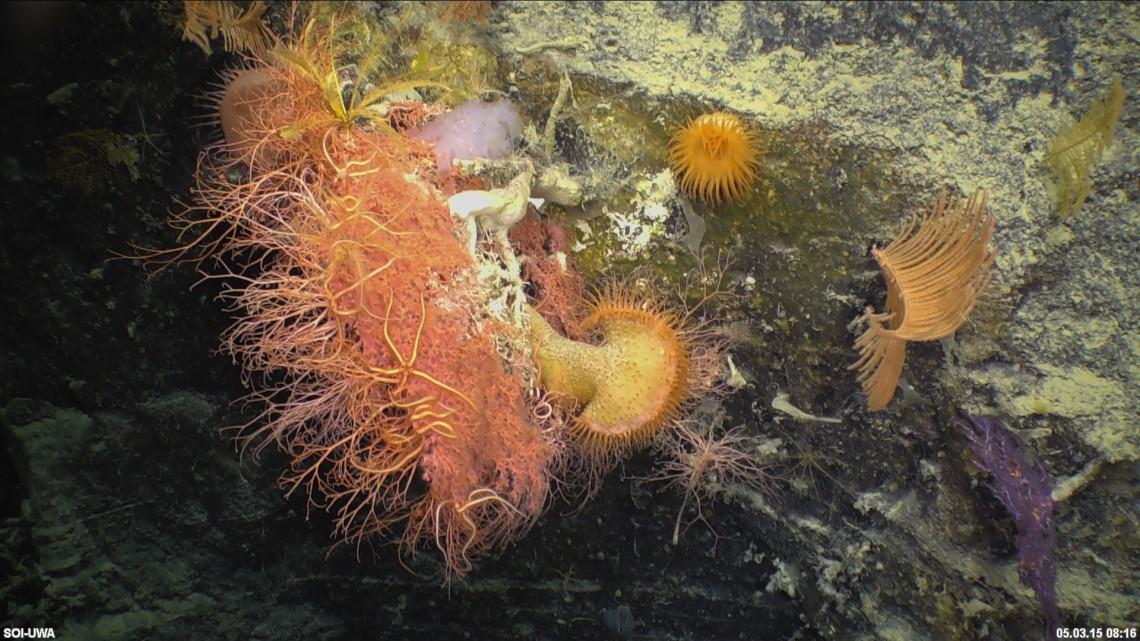 Flytrap anemone