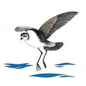 Australasian Seabird Group Logo