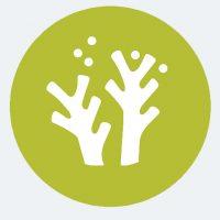 CoralEOI Logo