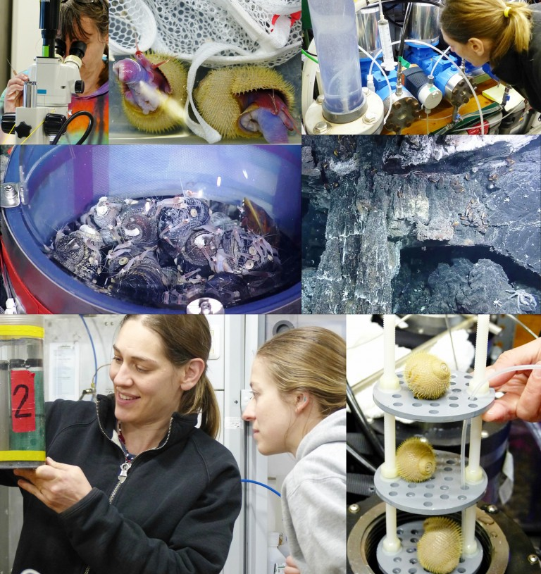 Just a few examples of the remarkable research scientists conducted on the ship and in the deep sea during the first half of the Vent Life expedition.