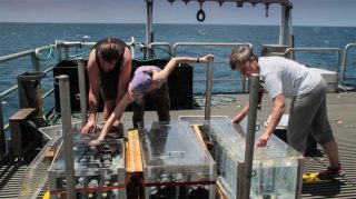 Melvin, Sarah and Maren deposit water samples inside the incubators