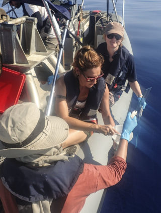 Janina uses glass plates to collect Sea Surface microlayer samples.