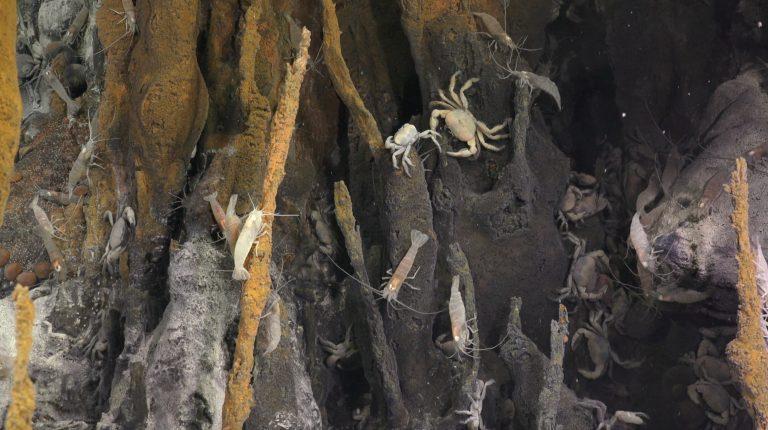 Shrimp and crabs gather around a hydrothermal vent 3,500 meters deep. Credit: Schmidt Ocean Institute.