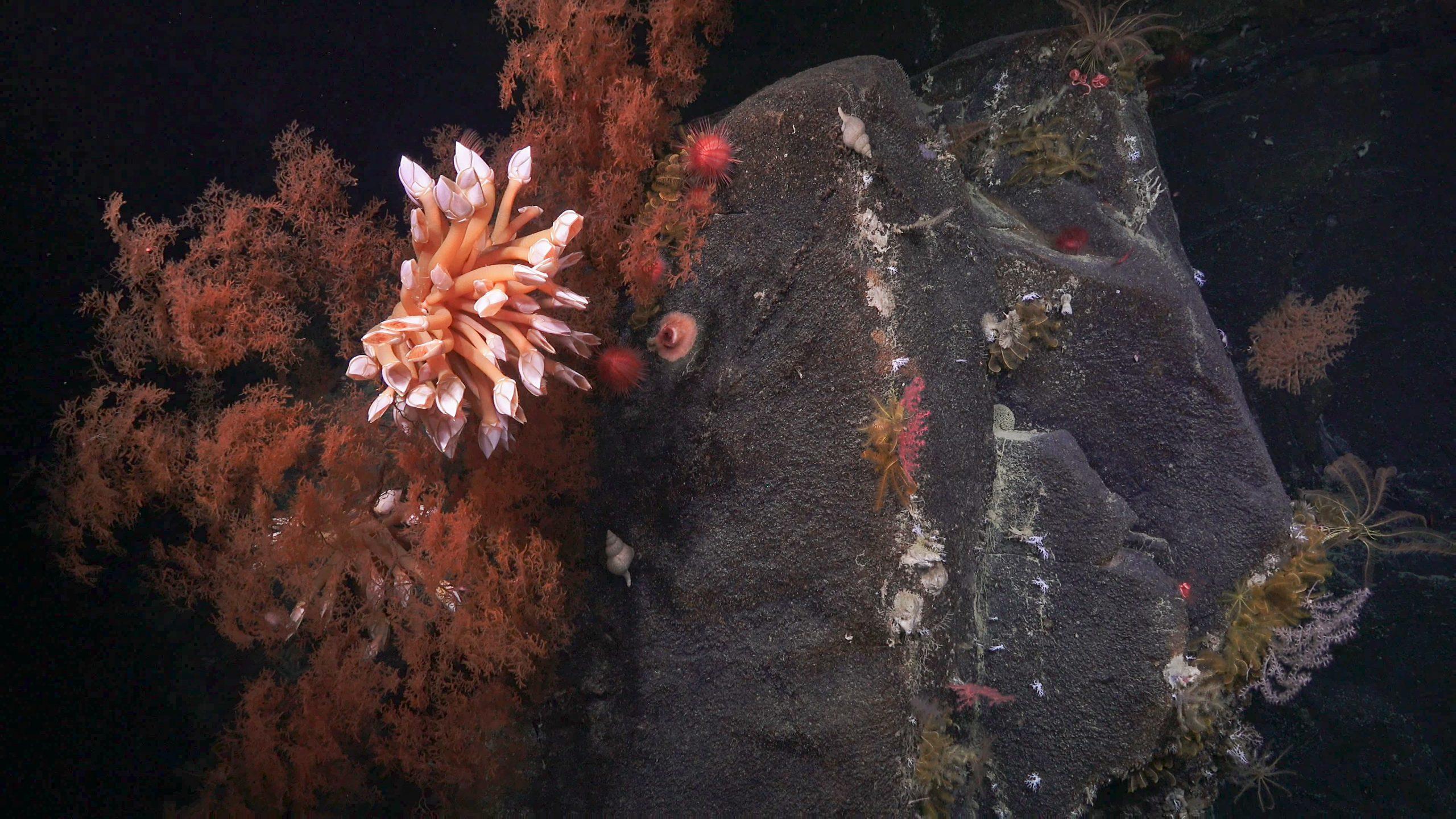 Geology At Sea Schmidt Ocean Institute