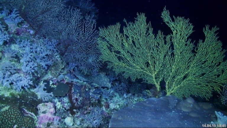 Deeper more exposed sites support a rich diversity of corals and filter feeders.