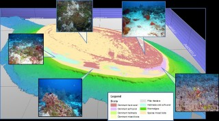 A shoal surveyed using multibeam and overlayed with and a habitat map.