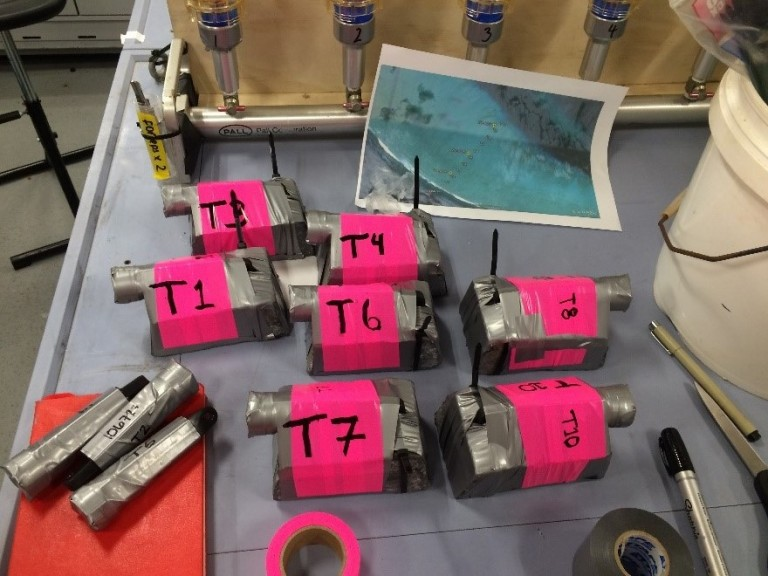 Temperature loggers that were deployed via snorkeling on the reef rim. Bright pink to be able to find them again.