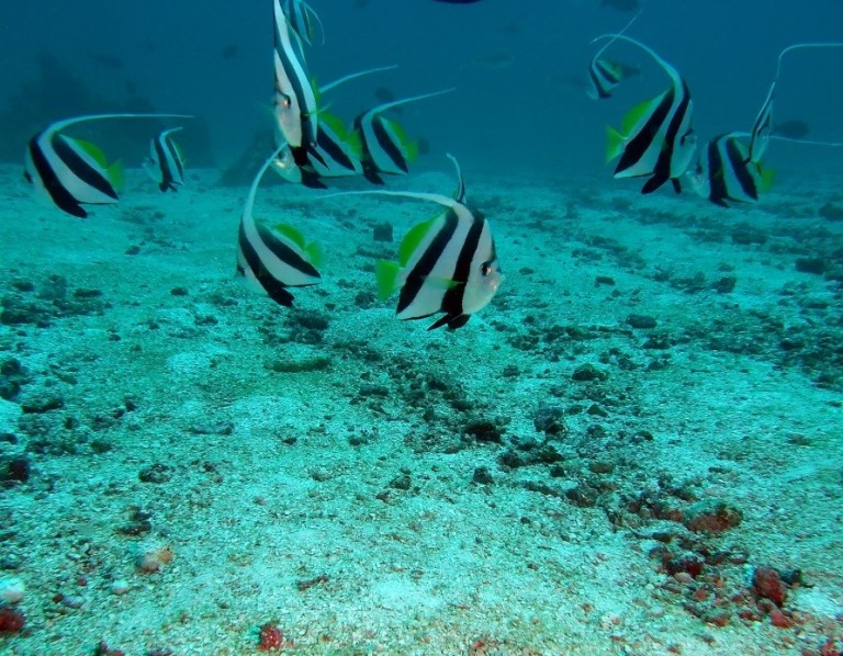 Reef fish are abundant and diverse. Over 330 species of fish, sharks and seasnakes have been found on a single shoal.