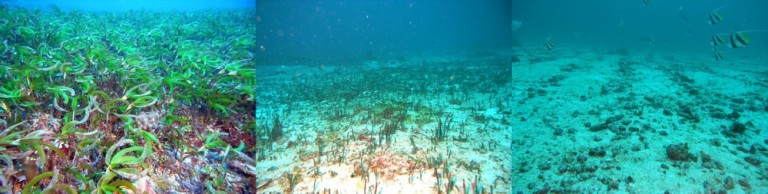 Images from 2010, 2011 and 2013 showing of change in a seagrass habitat at Vulcan Shoal.