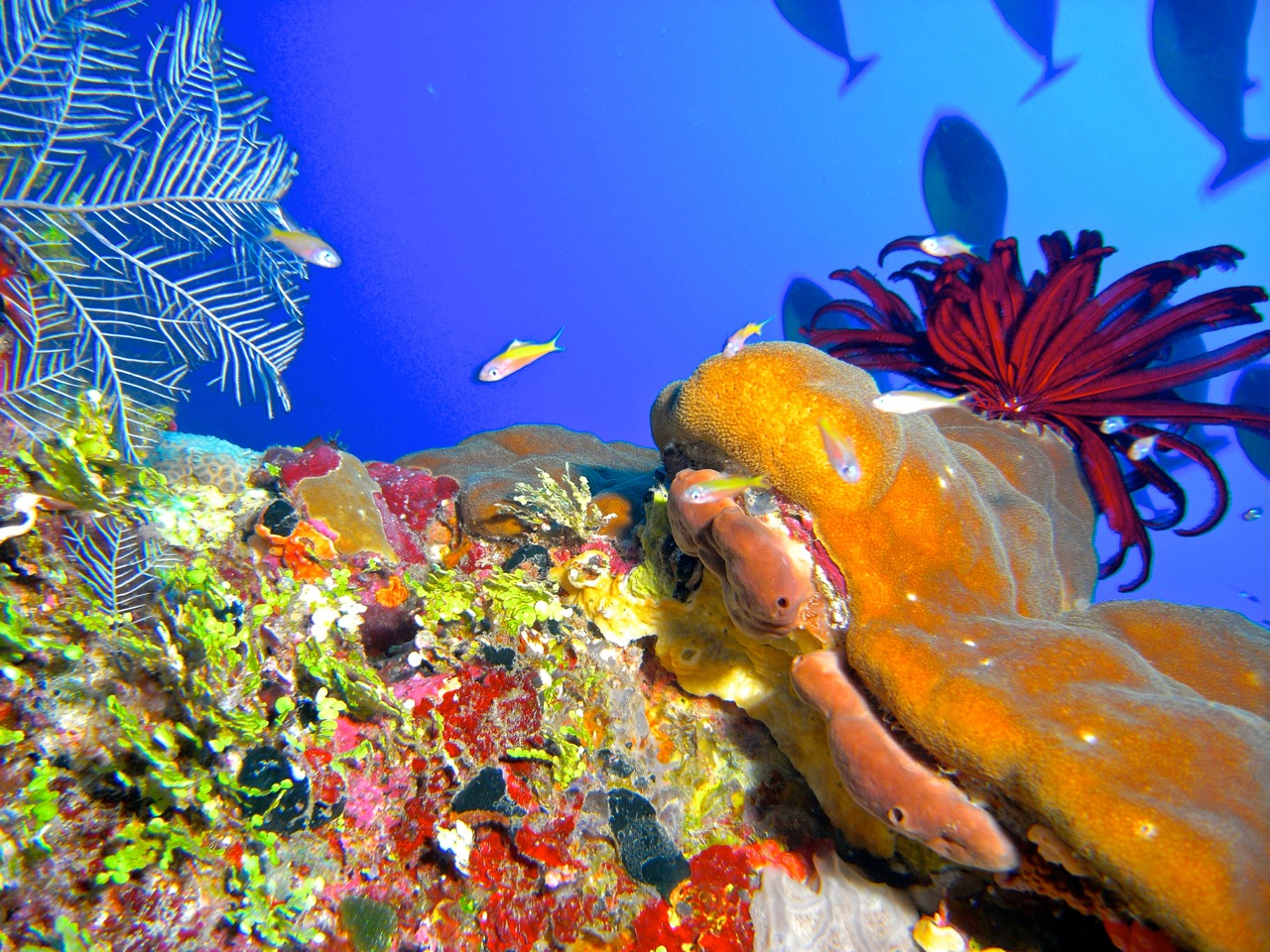 A glimpse of the biodiversity on a shallower Scott Reef site.