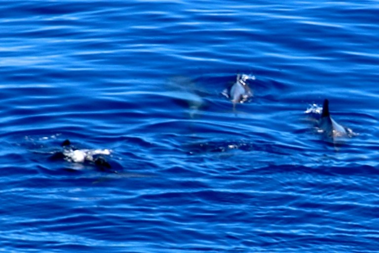 The pilot whales sighted early on.