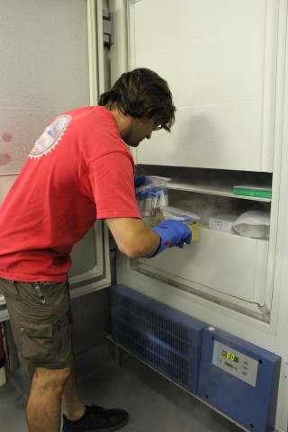 Matt puts away processed samples into the -80 freezer so that they can be later used for genetic sampling.