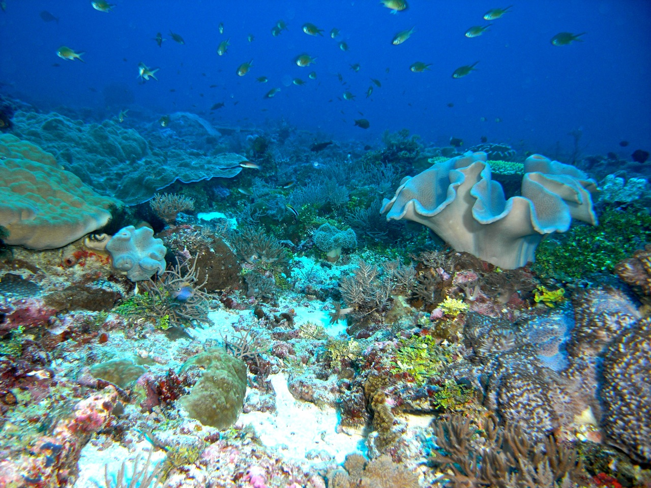A view of corals and sponges on one of the Scott Reef plateaus, taken during a previous expedition.