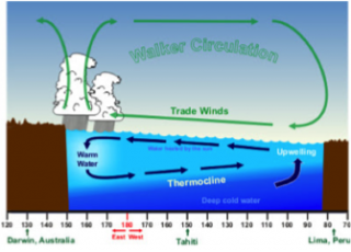 This diagram shows the normal atmospheric-oceanic interactions in the Pacific Ocean.