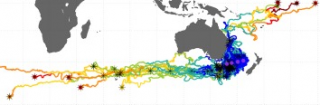 Drifters released (asterisks) and pathways relative to Tasman Sea sampled stations (purple)