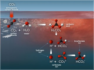 The changes in carbonate chemistry of the ocean due to ocean acidification (a long-term decrease in seawater pH).